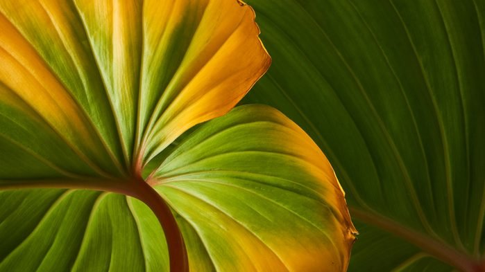 vinegar uses stop yellowing leaves