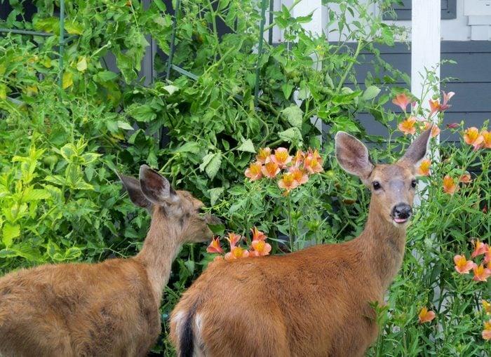 vinegar uses keep out deer