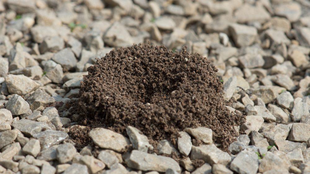 vinegar uses get rid of ants