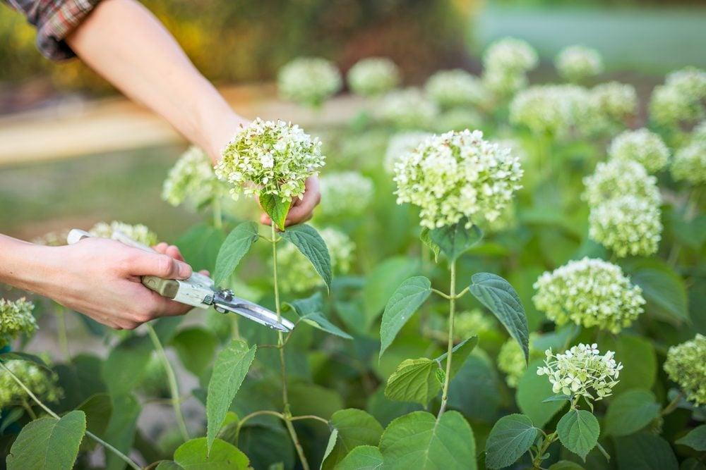 white vinegar uses keep cut flowers fresh