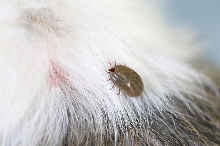 vinegar uses protect against fleas and tics