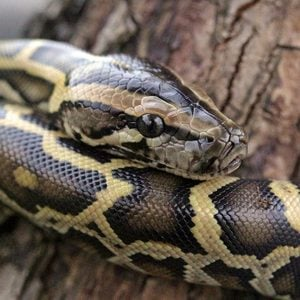 snake on furniture