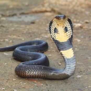 Here's Why There Are So Many Snakes on the Loose