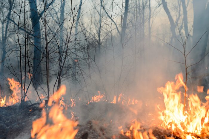 Forest fire, burning grass and small trees.