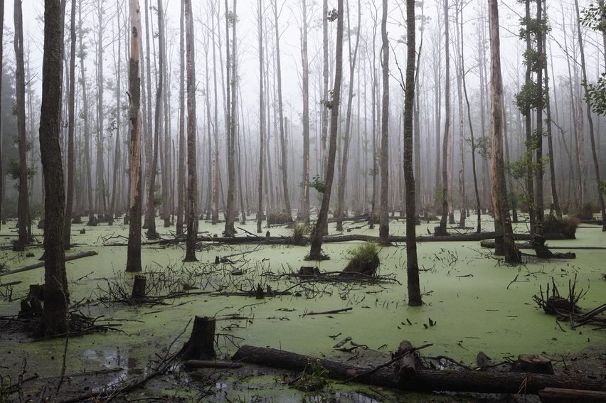 Spooky swamp filled with swamp monsters