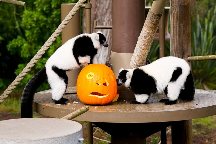 Halloween at the zoo