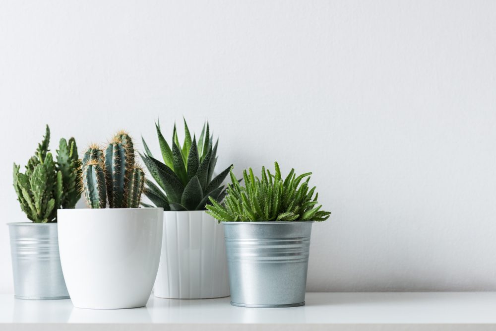 7 Ways To Keep Your Plants Alive When You Re Away