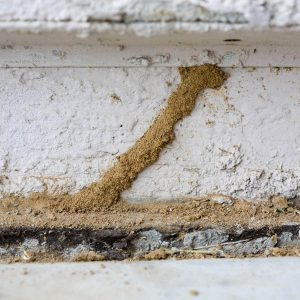 50 Super Dangerous Signs That Could Kill a Home Buy