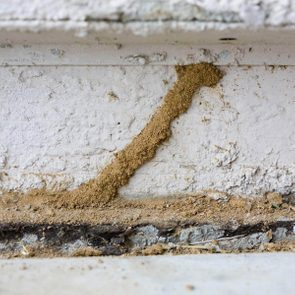 dfh1_shutterstock_18747745 inspect your foundation diy termite control how to get rid of termites