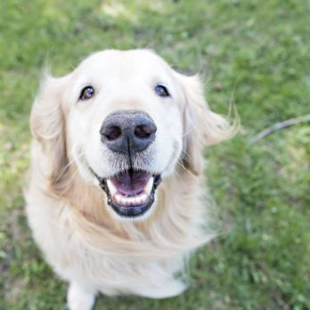 What Your Dog's Facial Expressions Really Mean