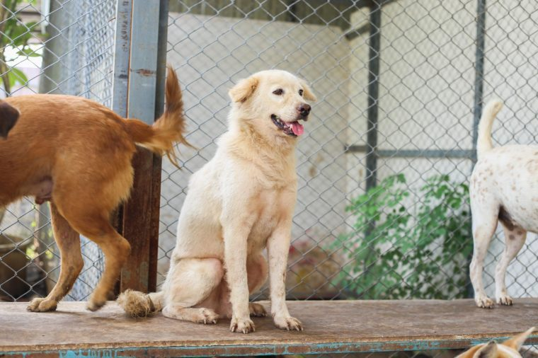 15 Questions You Need To Ask Before Adopting A Shelter Dog