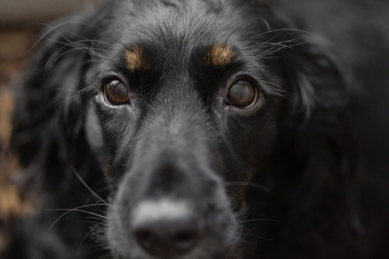 What Your Dog's Facial Expressions Really Mean | Reader's Digest