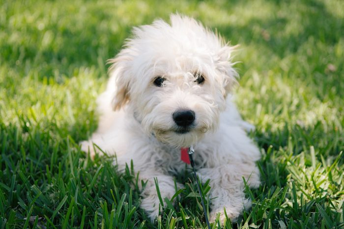 Adorable Puppy Playing in the Grass