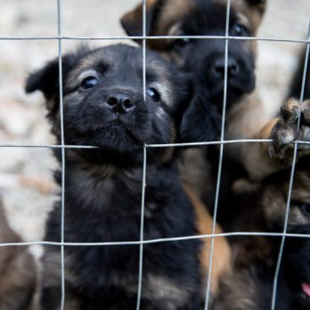 15 Things Dog Shelters Need You to Know