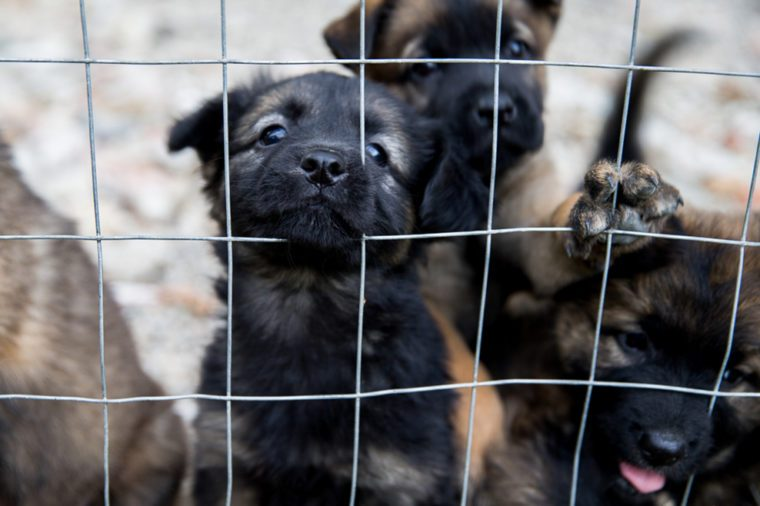 Puppy dogs waiting in the dog shelter behind the cage in Italy.