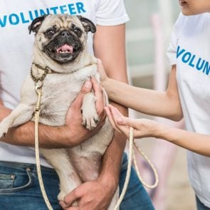 cropped image of two volunteers of animals shelter holding pug dog