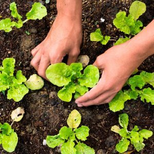 How to Choose Favorite Crops for Your Vegetable Garden