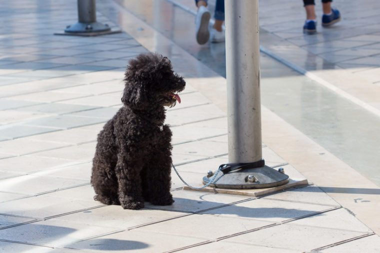 poor dog tied to a pole on pavement / Small dog on leash tied to a pole sitting on pavement, people in background.