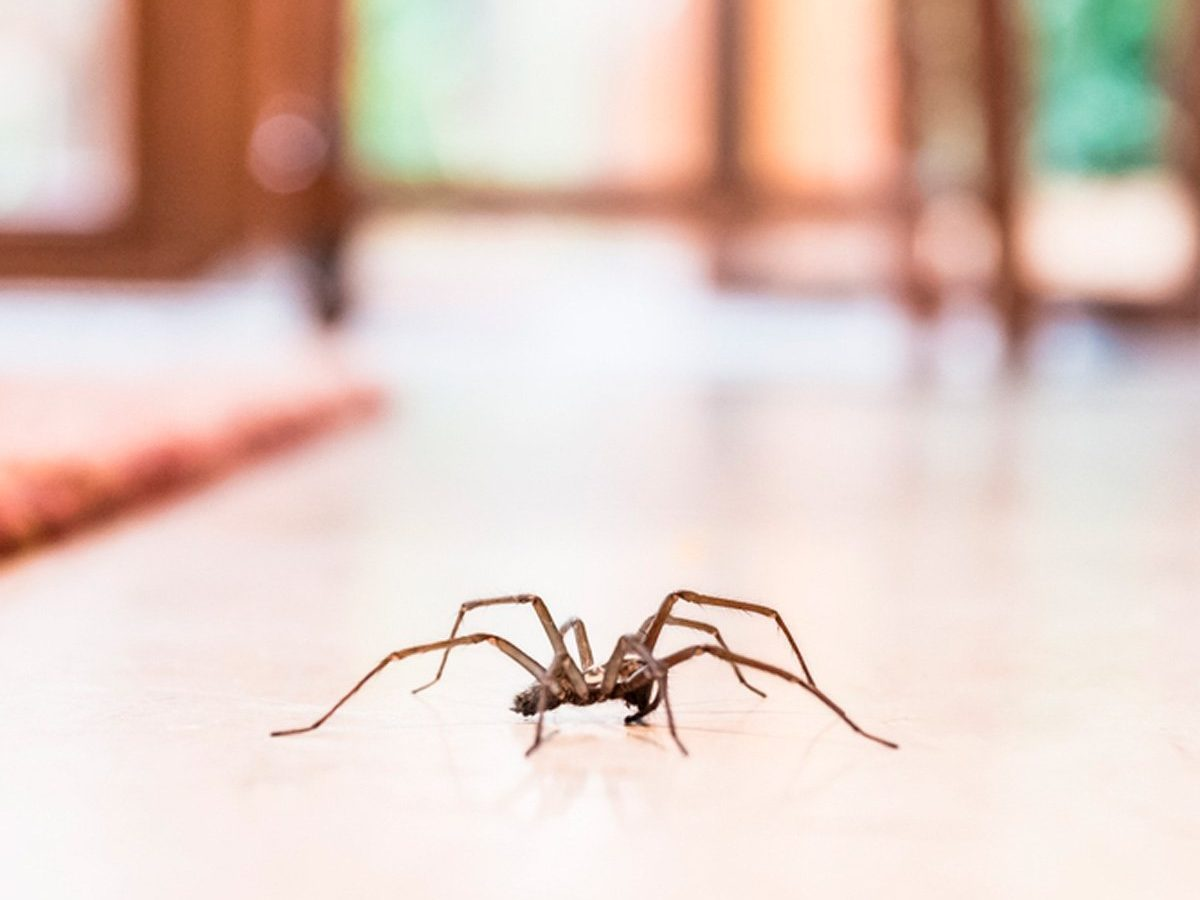 This Simple Hack Will Keep Spiders Out of Your House