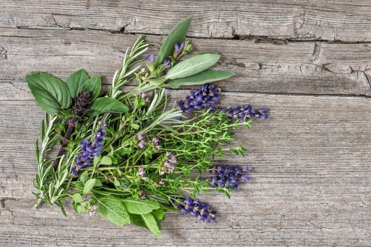 Bundle of fresh herbs. Basil, rosemary, mint, sage, thyme, oregano, marjoram, savory, lavender. Kitchen herbs