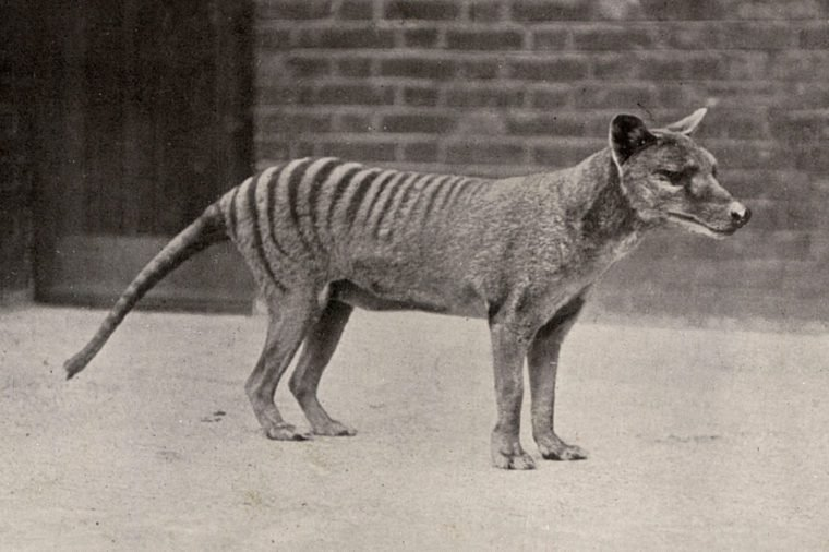 Animals That Have Gone Extinct in the Last 100 Years