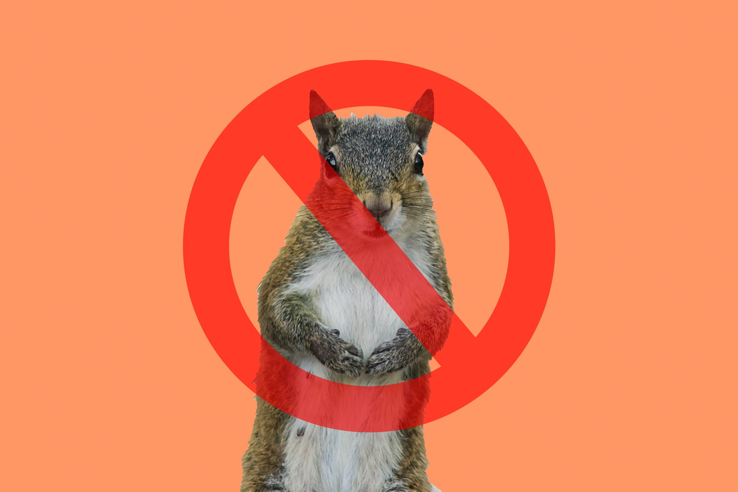 Squirrel on peach background with cancel sign through it