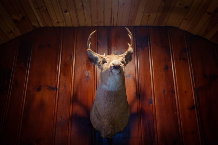 Rustic stuffed taxidermy deer head wall decoration