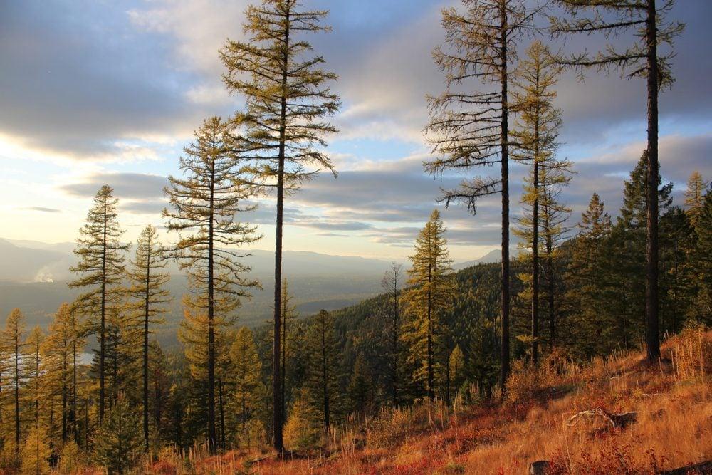 Autumn on Big Mountain, Whitefish, Montana