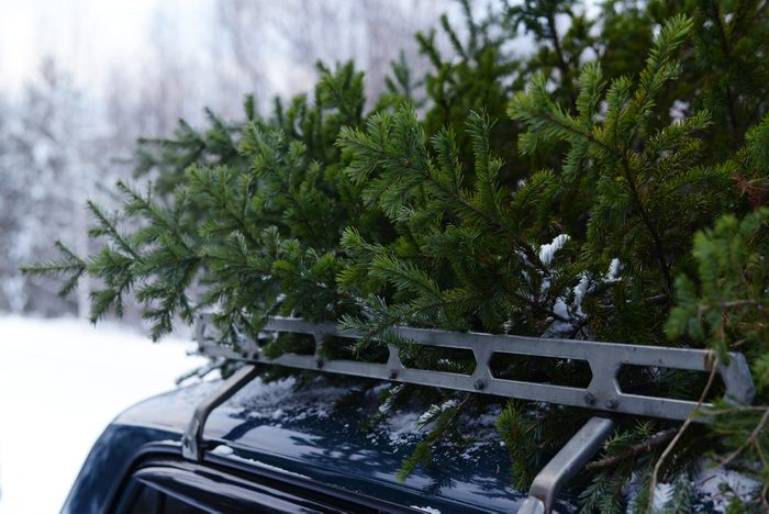Christmas tree on the roof of the car