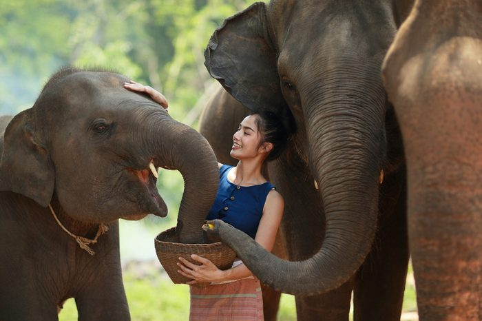 The young lady is feeding some food to her love friend elephants..