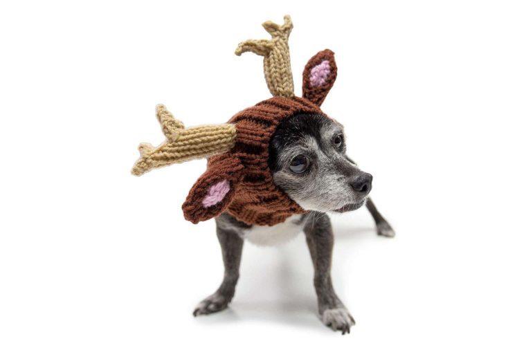 zoo snoods reindeer dog costume