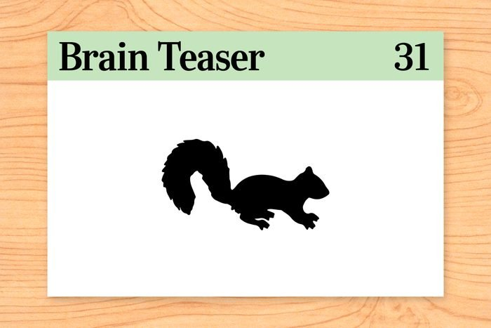 How far can a squirrel run into the woods?