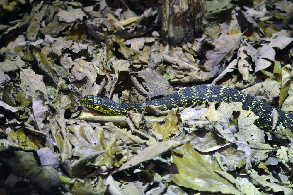 Snake Hidden in Leaves