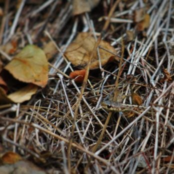 Can You Spot the Snakes in These 11 Photos?