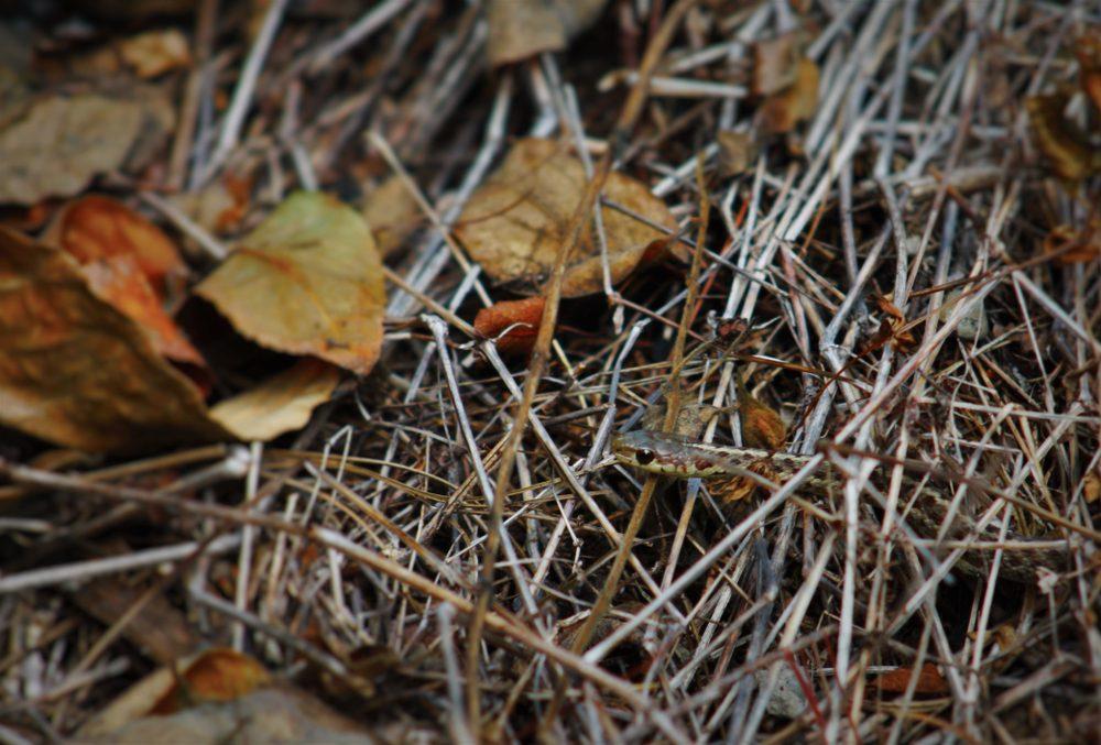 Hidden Garden Snake