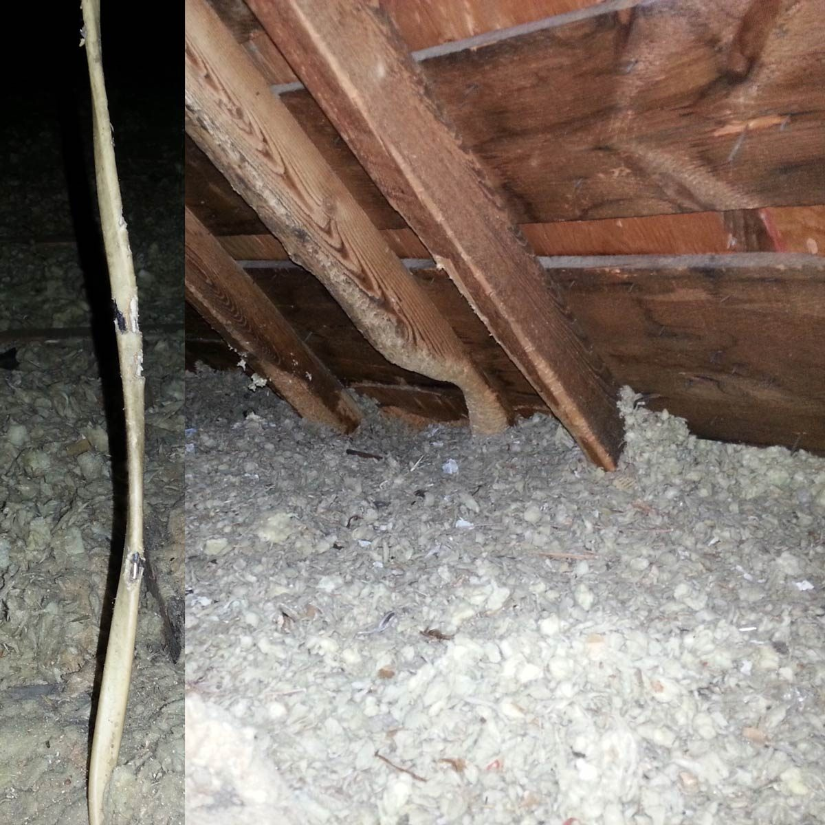 Beaver in the Attic!