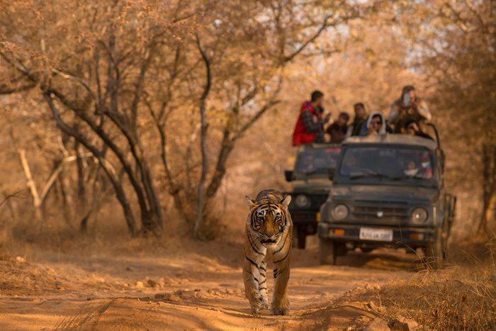 Ranthambore National Park India