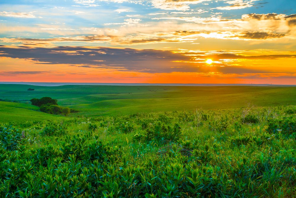 Sunset in the Flint Hills of Kansas with Cattle grazing in the far background.