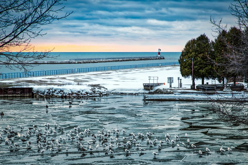 Seagulls sitting on the ice in the harbor at Two Rivers, Wisconsin.
