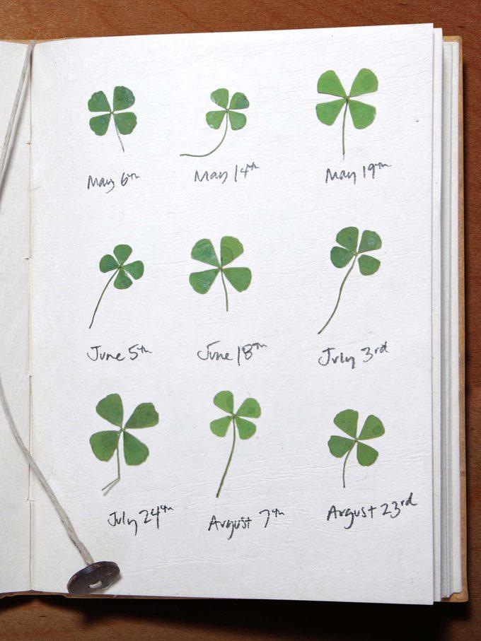 four leaf clover diary