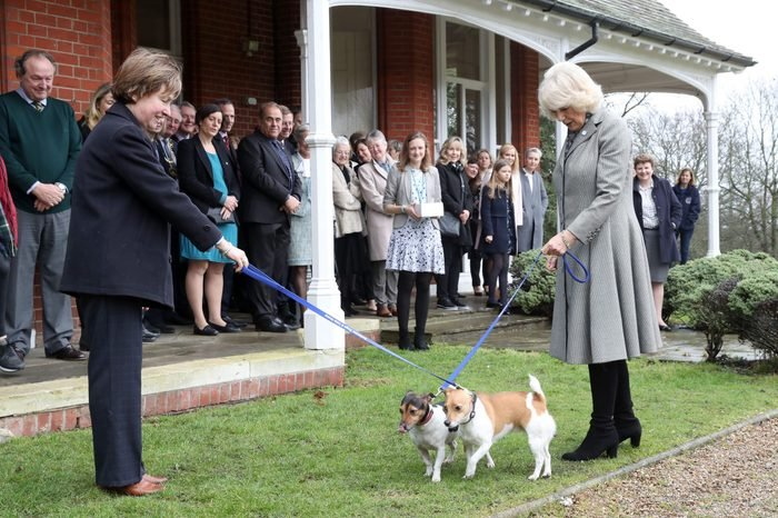 Camilla Duchess of Cornwall visit to Battersea Dogs and Cats Home, Old Windsor, Berkshire, UK - 01 Feb 2017