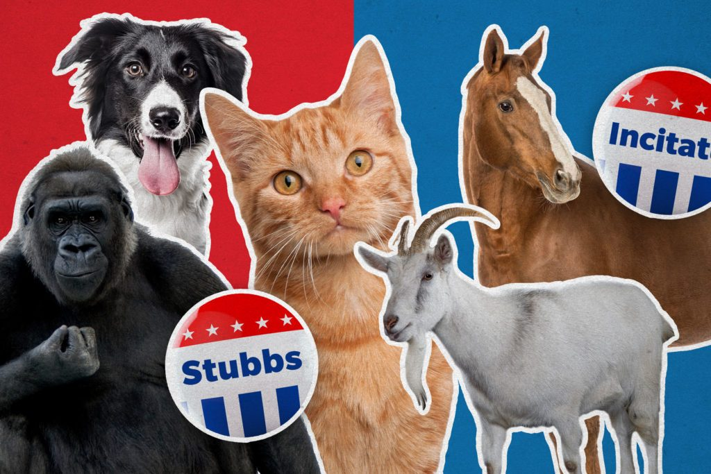 Animals with campaign buttons