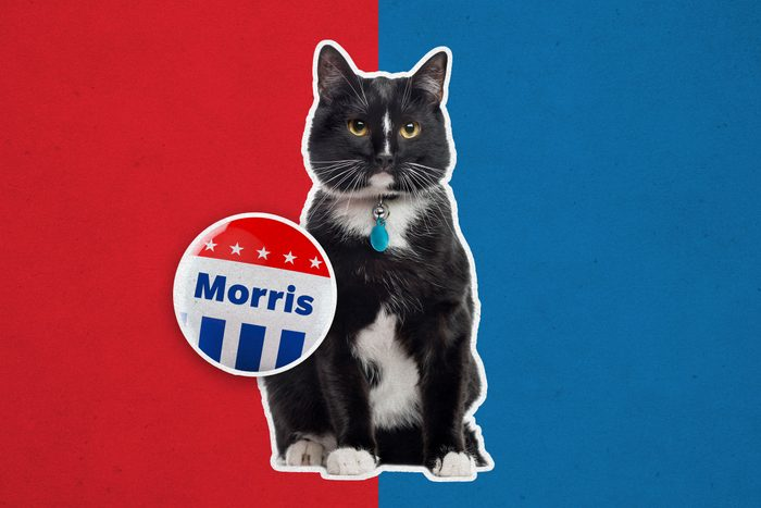Cat with campaign button
