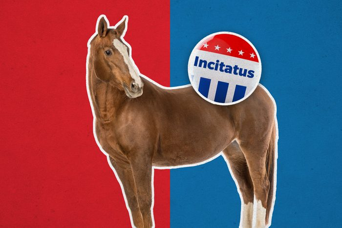 Horse with campaign button