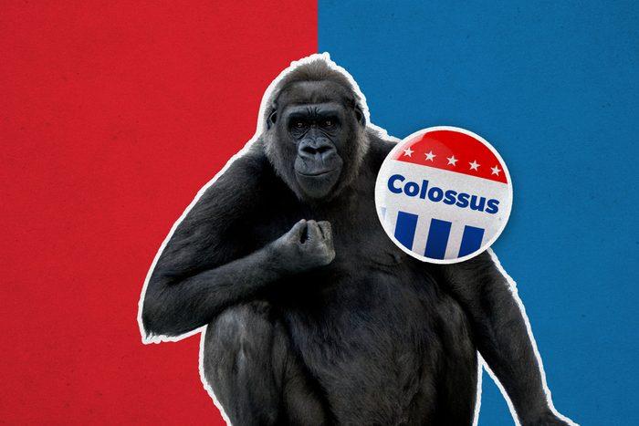 Gorilla with campaign button