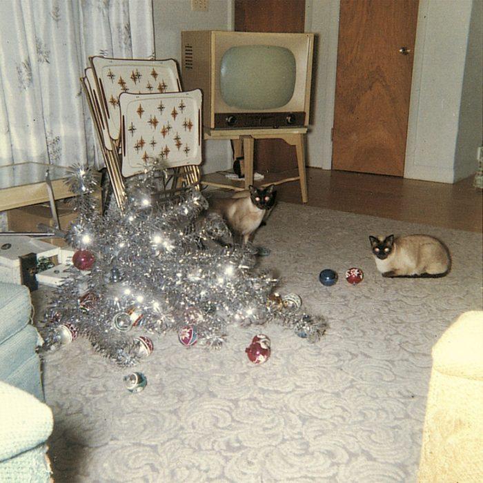 Fallen Christmas tree beside two cats