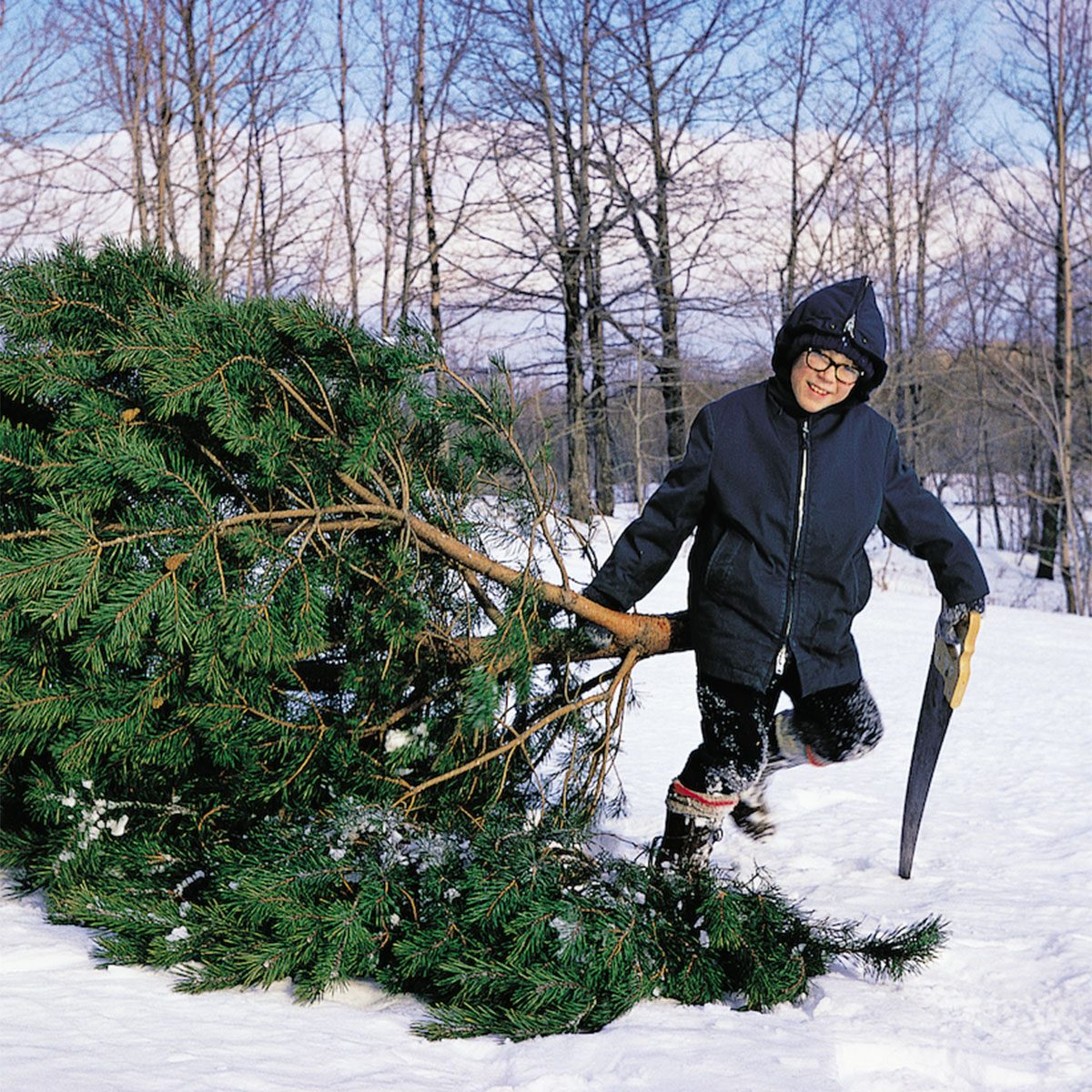 Boy dragging a tree he chopped down