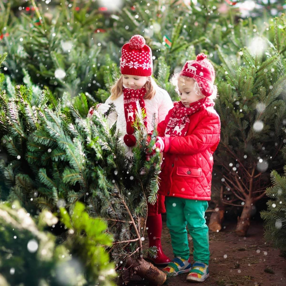 kids-and-christmas-trees-shutterstock_715619827 christmas tree species types of christmas trees