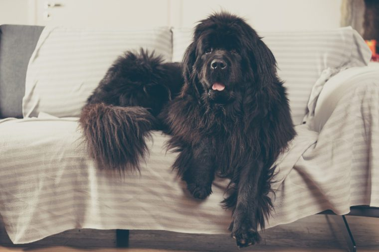 calm dog breeds