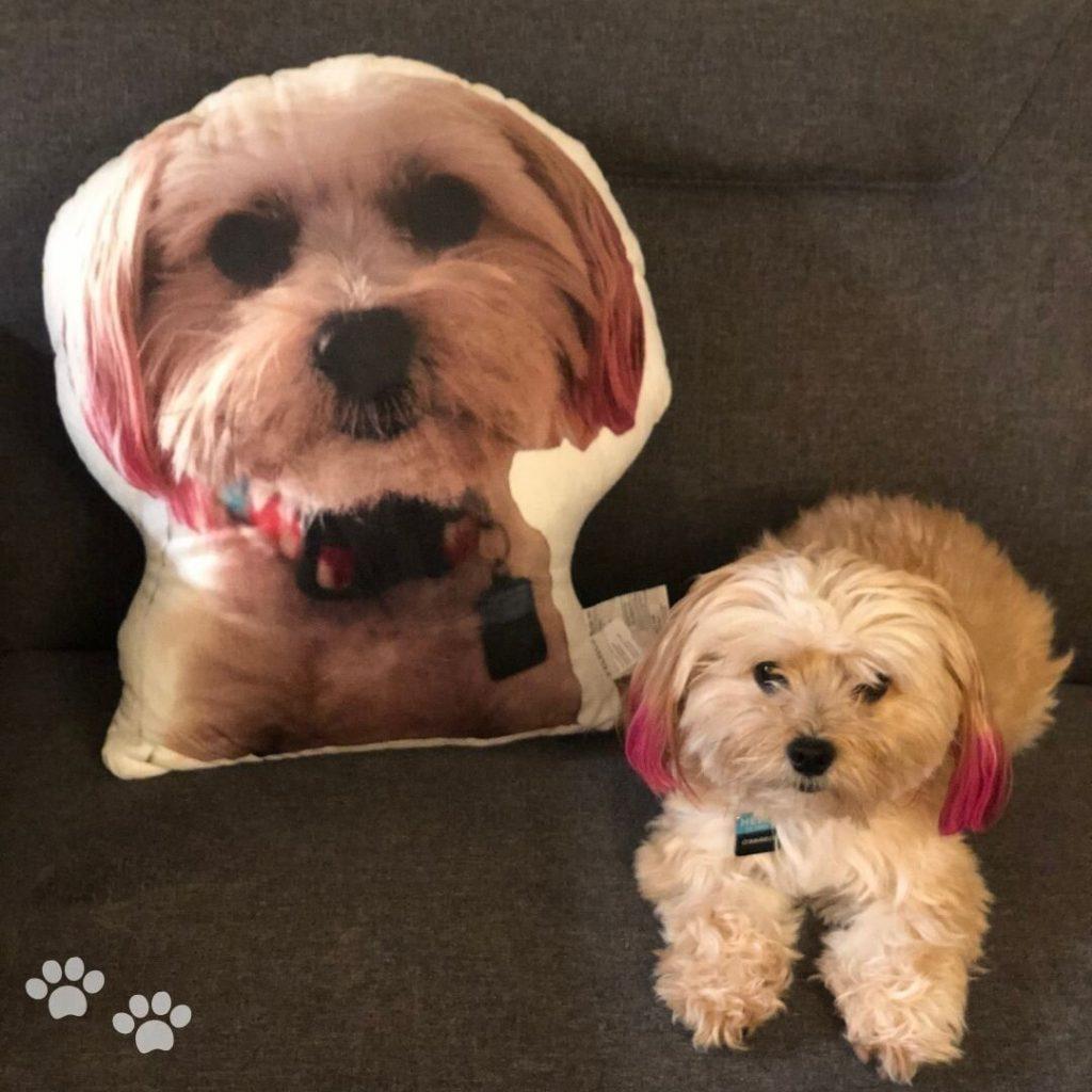 petsies pet pillow
